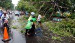 Satlantas  Polres Kediri Evakuasi Pohon Tumbang bersama Masyarakat
