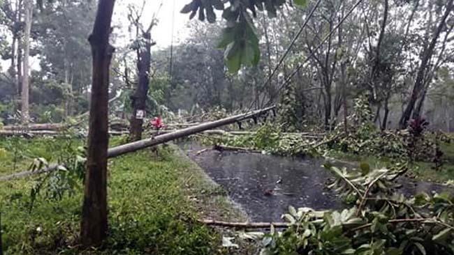 Kabupaten Jember Kembali Diamuk Angin Kencang