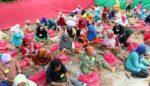 Jelang Panen Bawang Kampung Protol, Gelar Lomba Protol Bawang