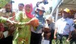 Gubernur Jatim Tunjuk Kabupaten Kediri Sebagai Contoh Agro Pertanian Milenial