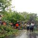 Hujan Deras dan Angin Kencang Tumbangkan Pohon Besar, Arus Lalin di Lamongan Macet Total