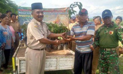 Kades Karangharjo Serahkan Bibit Durian Musang King