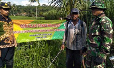 Lahan Kelompok Tani Hasil Bumi Klakah Jadi Objek Pengendalian OPT