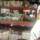Bakul Sayur di Kabupaten Malang Terdampak Covid-19, Dirugikan PSBB