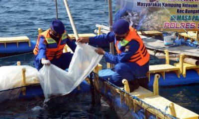 Penaburan benih oleh Kasat Polair AKP Lukman Hadi SH bersama Bhabinkamtibmas perairan dan perwakilan nelayan di pesisir pantai desa Kembangsambi. (im)