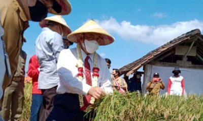 Kelompok Tani Sri Mulyo Minta Bantuan Perbaikan Saluran Irigasi