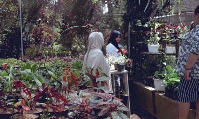 Merintis Dari Nol, Kampung Bunga Grangsil Kini Wisata Favorit Hingga Luar Pulau