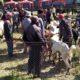 Para Pedagang Hewan Pasar Pathok Rapid Tes Gratis