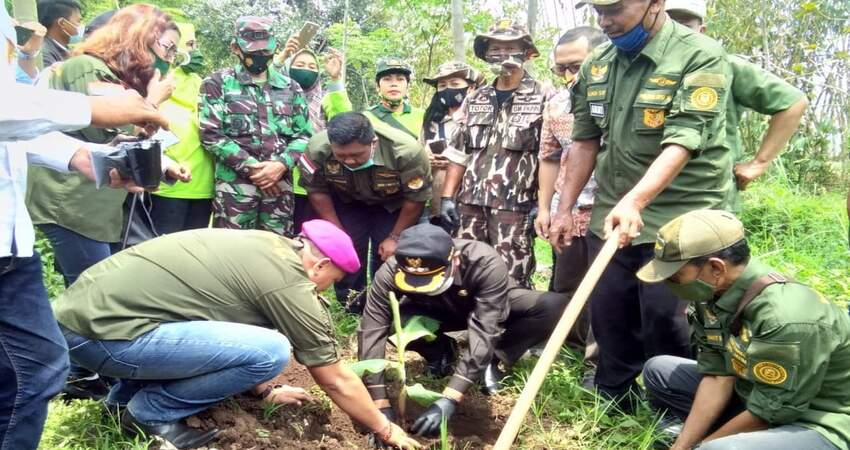 Penanaman pohon pisang jenis cavendish yang digelar Koperasi MNT di Jalan Pelabuhan Tanjung Perak Rt 07 Rw 01, Bakalan Krajan, Kecamatan Sukun, Kota Malang.