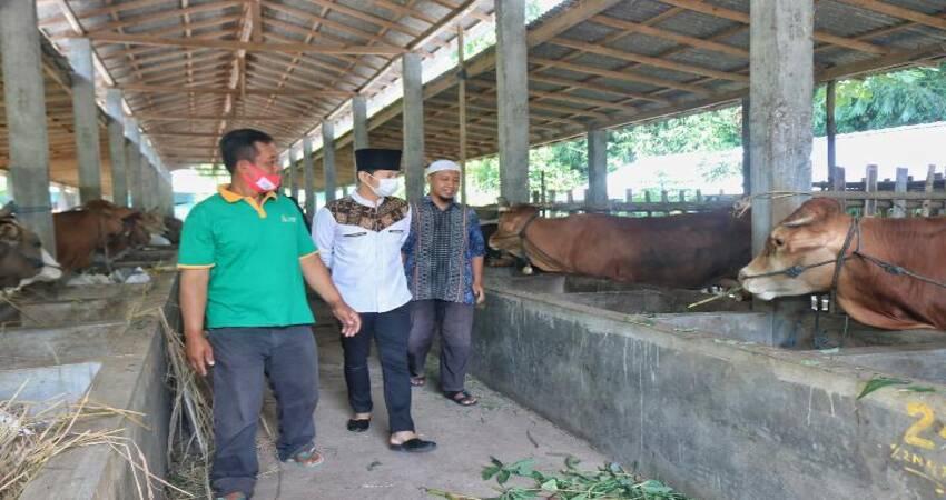 KUNJUNGI KANDANG: Mas Ipin saat mendatangi kandang komunal kelompok Mandiri Jati Bersemi di Desa Jati Kecamatan Karangan.