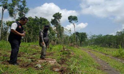 Bekas penebanngan pohon sonokeling di hutan Desa Sumber Rejo, Kecamatan Candipuro.