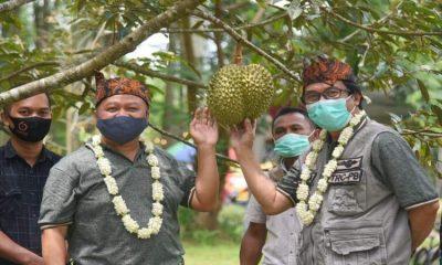 Peluncuran Agrowisata PPG Cluster Durian di Desa Sidomulyo Kecamatan Silo.