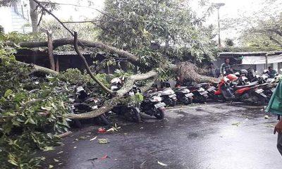 Diterpa Angin Kencang, Pohon Trembesi Samping MOG Timpa Motor Parkir