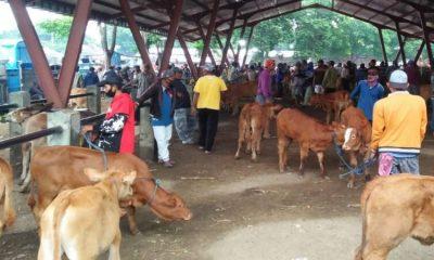Penjualan Hewan Ternak di Situbondo Masih Lesu
