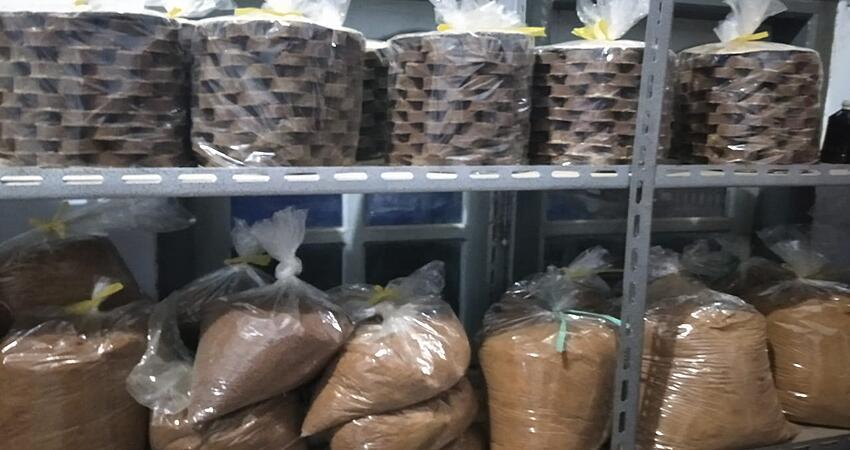Perjuangan Pembuat Gula Nira Kelapa Lumajang di Tengah Pandemi dan Terjangan Rafinasi