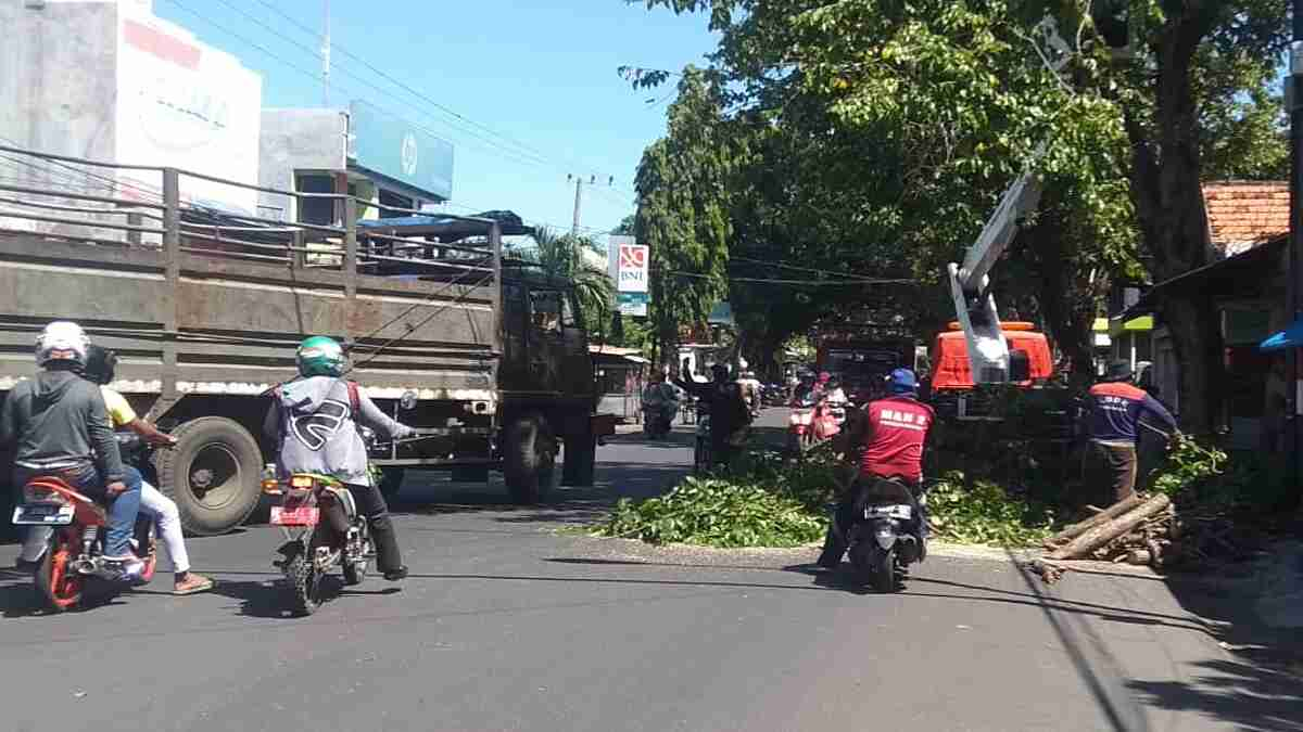 Hadapi Kemarau, DLH Kota Probolinggo Mulai Pangkas Dahan Pohon
