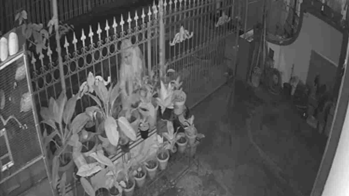 Seorang Wanita Terekam CCTV Mencuri Dua Bunga Aglonema
