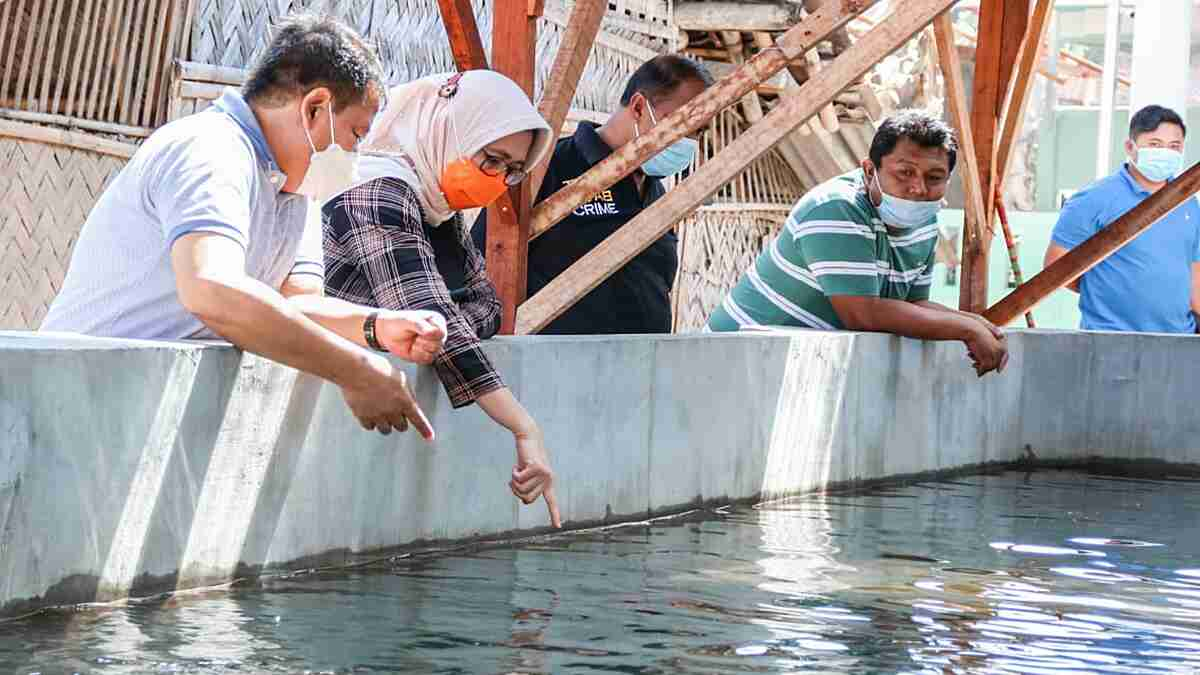 Peluang Bisnis Ikan Koi Sangat Menjanjikan, Wakil Bupati Lumajang Berharap Bisa Dikembangkan